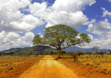 Kenya road with tree